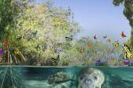 De mangrove als spiegel voor ecosystemen binnen organisaties