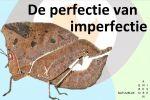 De perfectie van imperfectie
