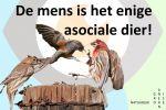 De mens is het enige asociale dier