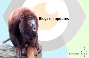 Blogs en updates