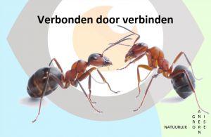 Wat een mier ons kan leren over samenwerking?