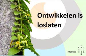 Hoe gaat de vanilleplant om met veranderingen?